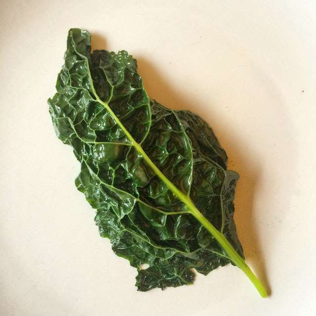 EMP-Leaf-of-Kale